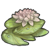 """<a href=""""https://www.arcanezoo.com/world/items?name=Waterlily"""" class=""""display-item"""">Waterlily</a>"""